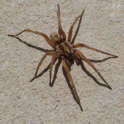 Уничтожение пауков в Ярославле
